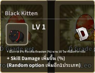 BlackKitten_Detail